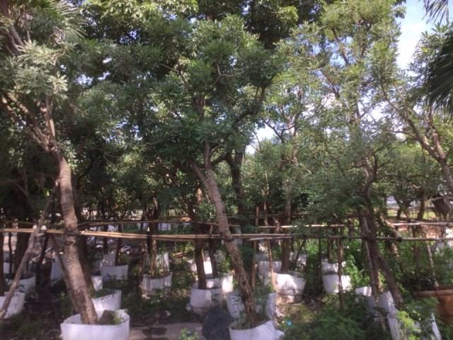 Cây Xanh, Cây Cảnh